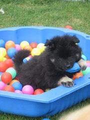 Spielen im Bällebad