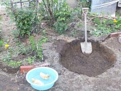2012/05/06(日)  フォア&グラ用の池を作製中