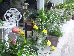 2012/05/09(木)  サロン前のお花が満開になりました