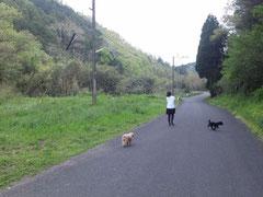 2012/04/24(火) 妻&わんちゃんとおさんぽです