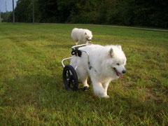 """Mein zweiter  Spaziergang mit """"Rollstuhl"""""""