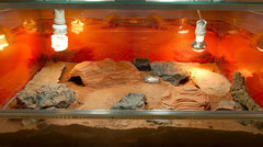 Das Terrarium gut strukturiert mit verschiedenen Höhlen und Versteckmöglichkeiten