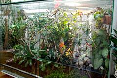 Das Terrarium kurz nach der Bepflanzung