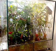Das Terrarium ein Jahr später