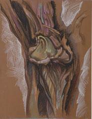 """Ольга Попова. """"Анатомия дерева"""" лист 4, пастель, литографский карандаш, 2003"""