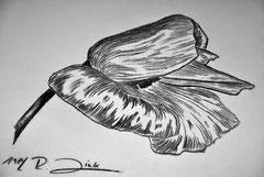 Klatschmohnblüte (Kohlezeichnung)