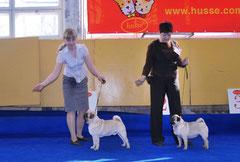 Лучший Юниор Ласти Донник и Госпожа Бовари