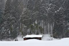 冬日深々(木村一馬)