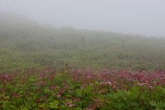 「朝霧の高原」 滋賀・伊吹山 (横山雅生)