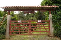 Wohnanlagen stehen wegen der vergifteten Umwelt preiswert zum Verkauf / Industrie / Ananas - Costa Rica