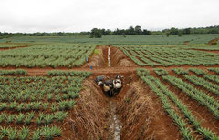 Mißbrauch einer fruchtbaren Landschaft im großen Stil / Industrie / Ananas - Costa Rica