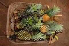 Organisch angebaute Ananas aus Uganda / Öko/Bio Ananas - Uganda