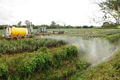 Hochkonzentrierte Spritzmittel gelangen direkt ins Oberflächenwasser und werden in die Flüsse geleitet / Industrie / Ananas - Costa Rica