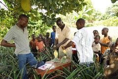 Regelmäßige Qualitäts- und Anbaukontrollen durch den Bio Zertifizierer IMO sind wichtig für den Export / Öko/Bio Ananas - Uganda