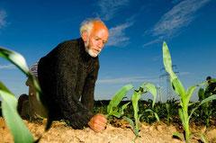 Ein Bio - Landwirt beteiligt sich an der Aktion - jede genmanipulierte Pflanze wird sorgsam und mit Respekt entfernt / Genmais - Deutschland