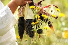 Eine Besonderheit sind die schwarzen Maiskolben / Mais - Mexiko