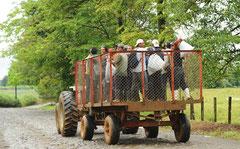 Arbeiter auf dem Weg zur Arbeit / Industrie / Ananas - Costa Rica
