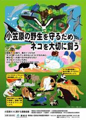 ポスター:小笠原の野生を守るためネコを大切に飼う