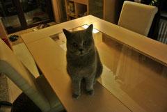 Stella immer neugierig