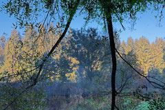 Peter Braunholz, PARALLEL NATURE VI, Mühlviertel, Österreich , 2019, 100 x 150 cm, Archivpigmentdruck auf Hahnemühle Fine Art Baryta auf Alu-Dibond, Edition: 3 + e.a