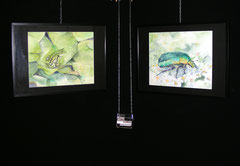 exposition aquarelle naturaliste ANA