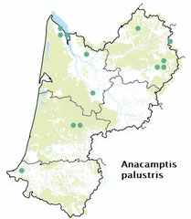 Carte distribution Anacamptis palustris - Orchis des marais