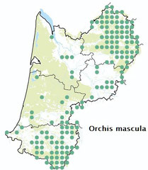 carte distribution Orchis mascula - Orchis mâle