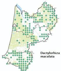 Carte distribution Dactylorhiza maculata -  Orchis tacheté