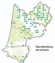 Carte distribution Dactylorhiza incarnata -  Orchis incarnat
