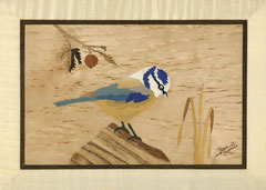 La mésange bleue (305/220)