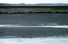 Sylt, Wattenmeer, Bild 9, analog fotografiert