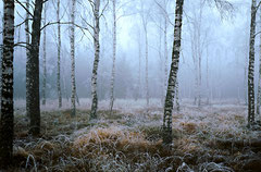 Schönbuch im Herbst, Bild 1, analog fotografiert