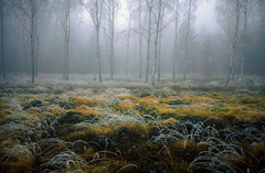 Schönbuch im Herbst, Bild 2, analog fotografiert