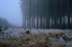 Schönbuch im Herbst, Bild 4, analog fotografiert