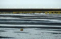 Sylt, Wattenmeer, Bild 5, analog fotografiert