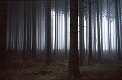 Schönbuch im Herbst, Bild 3, analog fotografiert