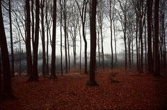 Schönbuch im Herbst, Bild 5, analog fotografiert