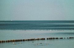 Sylt, Wattenmeer, Bild 1, analog fotografiert