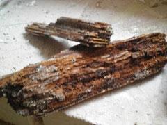 Holzzerstörende Pilze-u. Insekten an Wandlager