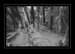 Aufstig durch den Rhododendronwald zum Lamjura Pass, 3530m