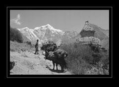 Aufstieg nach Phortse Dranka / Tabeche Peak, 6367m