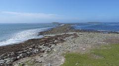 Kelp Point