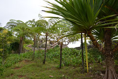 ehemalige Kaffeplantage, Parque Nacional de Gran Piedra