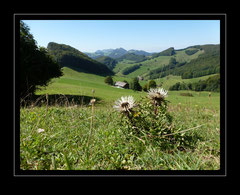 Schattenberg, Langenbruck BL