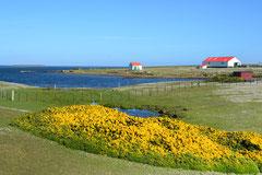 Settlement, Bleaker Island