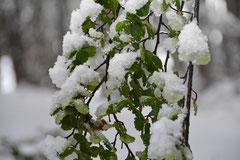 Schnee im Tierra del Fuego NP