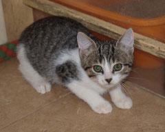 Karton-Kitten Nr. 2 heißt jetzt FEIVEL und sagt ganz herzlichen Dank an seine liebe Patentante NATALIE ♥