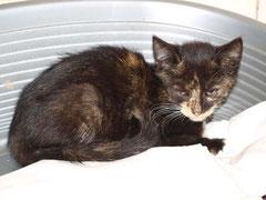 Friedhof-Kitten Nr. 2 heißt jetzt FLÄMMCHEN und sagt ganz herzlichen Dank an ihre liebe Patentante BIRGID ♥