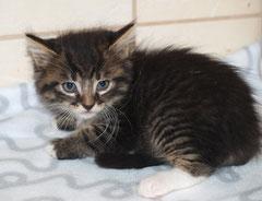 Kitten Nr. 6 heißt jetzt FINDUS und sagt ganz herzlichen Dank an seine liebe Patentante SONJA ♥