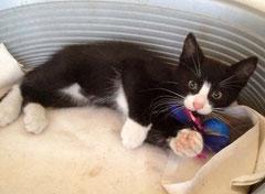 Kitten Nr. 5 heißt jetzt MIKESCH und sagt ganz herzlichen Dank an seine liebe Patentante SUSANNE ♥